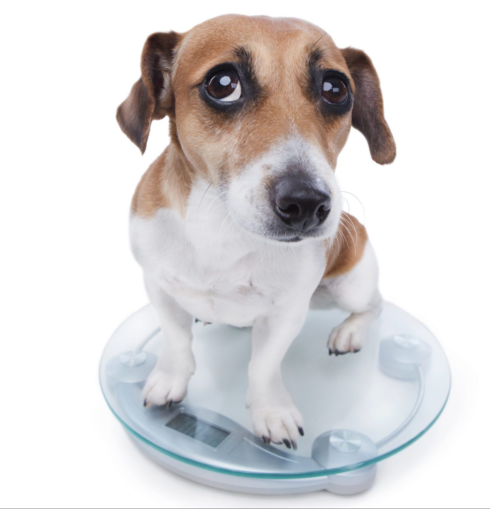 Weight loss tips for dogs